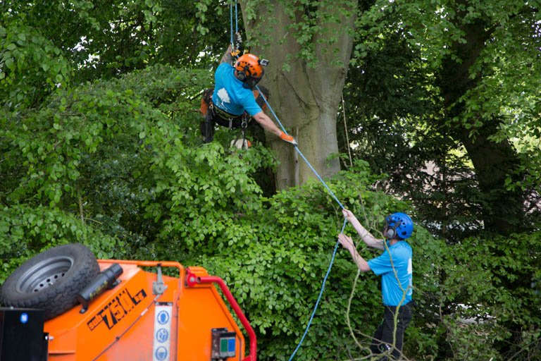 Photo of tree surgery and support
