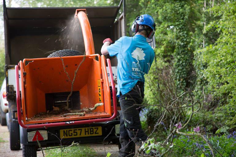 Domestic Tree Surgery The Blue Tree Company