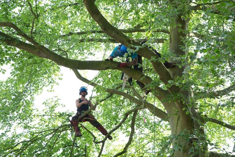 The Blue tree Company Tree Surgery