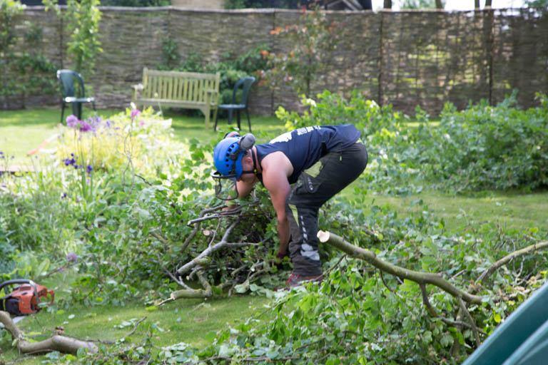 The Blue Tree Company domestic tree surgery
