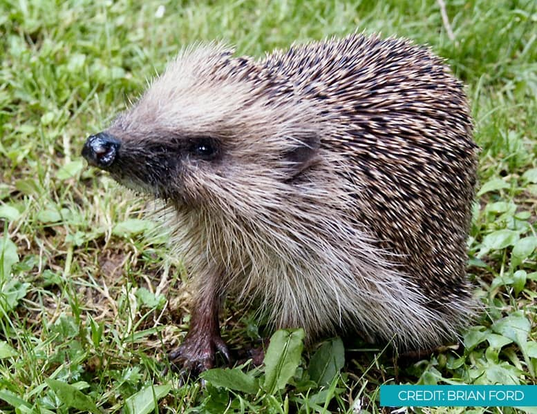 Help Hedgehogs Through The Colder Months